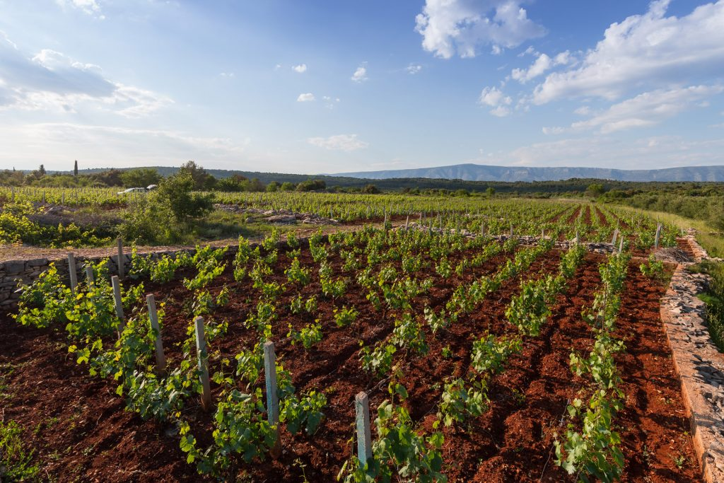 Stari Grad Plain / biggest wine region is also one of its most beautiful, nestled in the sunny, central north of the Hvar Island.